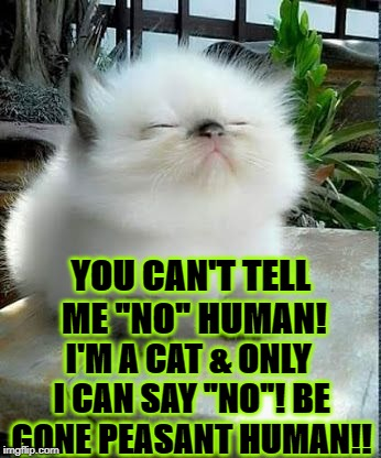 "YOU CAN'T TELL ME ""NO"" HUMAN! I'M A CAT & ONLY I CAN SAY ""NO""! BE GONE PEASANT HUMAN!! 
