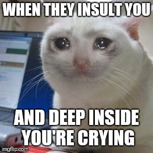 Crying cat | WHEN THEY INSULT YOU AND DEEP INSIDE YOU'RE CRYING | image tagged in crying cat | made w/ Imgflip meme maker