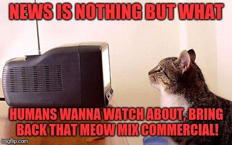 NEWS IS NOTHING BUT WHAT HUMANS WANNA WATCH ABOUT, BRING BACK THAT MEOW MIX COMMERCIAL! | image tagged in cat watching tv | made w/ Imgflip meme maker