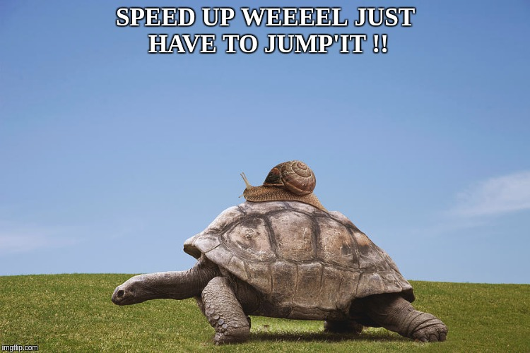 The Snail and The Tortoise  | SPEED UP WEEEEL JUST HAVE TO JUMP'IT !! | image tagged in turtle,snail riding turtle,snail,challenge accepted rage face,brace yourselves,the great awakening | made w/ Imgflip meme maker