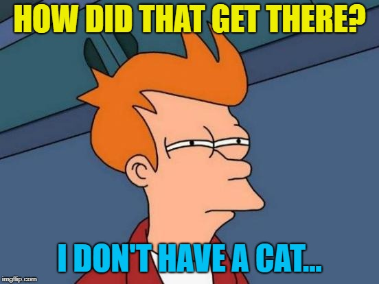 Futurama Fry Meme | HOW DID THAT GET THERE? I DON'T HAVE A CAT... | image tagged in memes,futurama fry | made w/ Imgflip meme maker