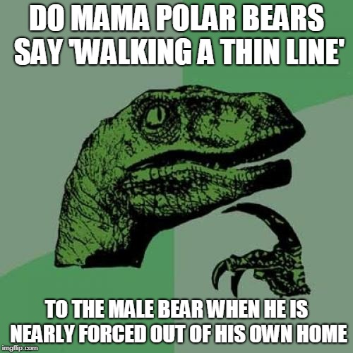 No title, it's just an enquiry | DO MAMA POLAR BEARS SAY 'WALKING A THIN LINE' TO THE MALE BEAR WHEN HE IS NEARLY FORCED OUT OF HIS OWN HOME | image tagged in memes,philosoraptor,funny,polar bear,ice,home | made w/ Imgflip meme maker