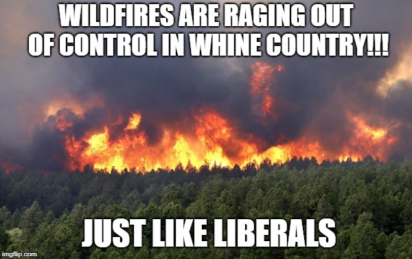 WILDFIRES ARE RAGING OUT OF CONTROL IN WHINE COUNTRY!!! JUST LIKE LIBERALS | image tagged in forest fire | made w/ Imgflip meme maker