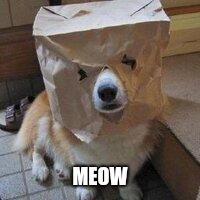 I'm not your dog | MEOW | image tagged in i'm not your dog | made w/ Imgflip meme maker