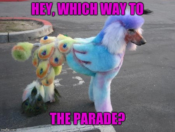 HEY, WHICH WAY TO THE PARADE? | made w/ Imgflip meme maker