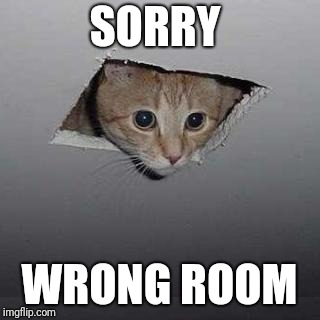 Ceiling Cat | SORRY WRONG ROOM | image tagged in memes,ceiling cat | made w/ Imgflip meme maker