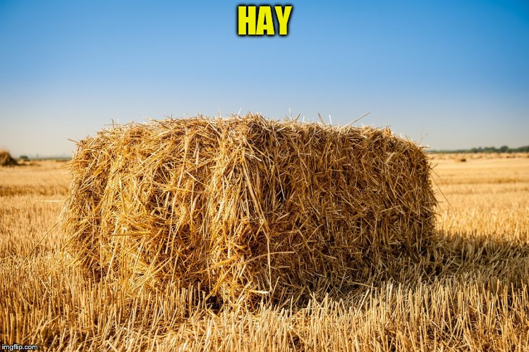 HAY | made w/ Imgflip meme maker