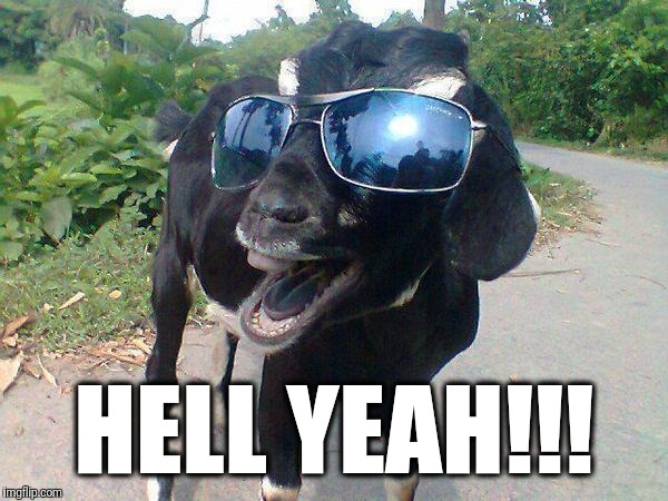 Hell Yeah Goat! | HELL YEAH!!! | image tagged in hell yeah goat | made w/ Imgflip meme maker