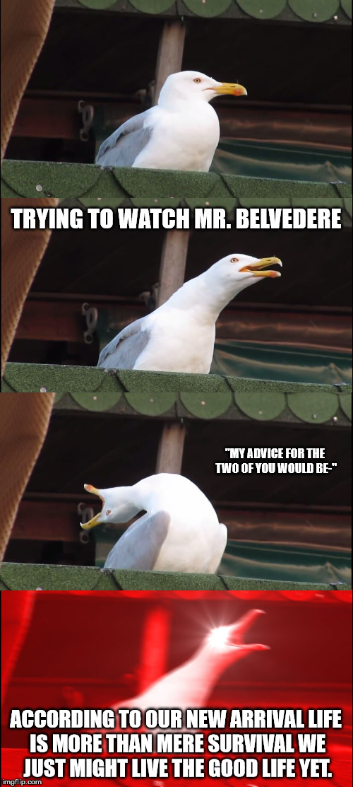 "Inhaling Seagull Meme | TRYING TO WATCH MR. BELVEDERE ""MY ADVICE FOR THE TWO OF YOU WOULD BE-"" ACCORDING TO OUR NEW ARRIVAL LIFE IS MORE THAN MERE SURVIVAL WE JUST  