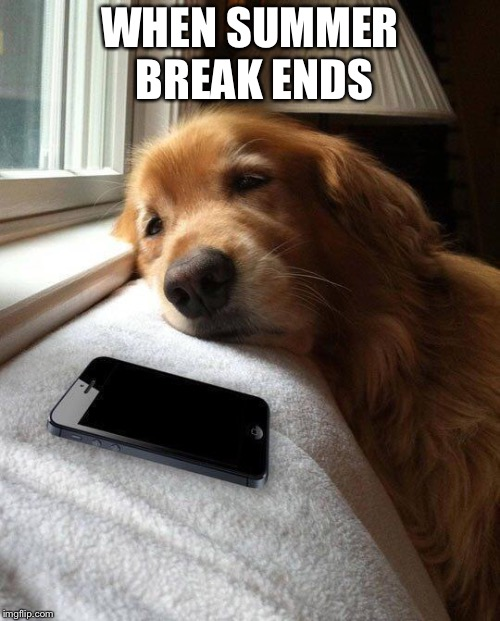 Monday sad pup | WHEN SUMMER BREAK ENDS | image tagged in monday sad pup | made w/ Imgflip meme maker