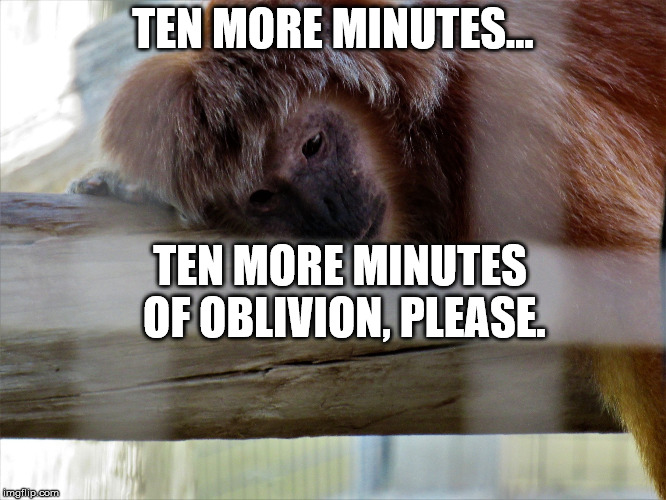 Snooze monkey | TEN MORE MINUTES... TEN MORE MINUTES OF OBLIVION, PLEASE. | image tagged in snooze monkey | made w/ Imgflip meme maker