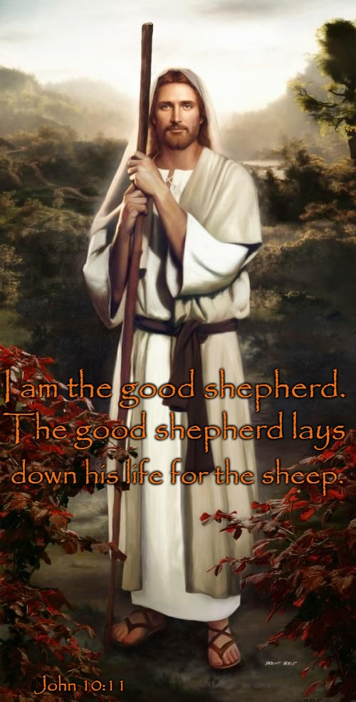 John 10:11 The Good Shepherd Lays Down His Life for His Sheep | John 10:11 I am the good shepherd. The good shepherd lays down his life for the sheep. | image tagged in bible,holy bible,holy spirit,bible verse,verse,god | made w/ Imgflip meme maker