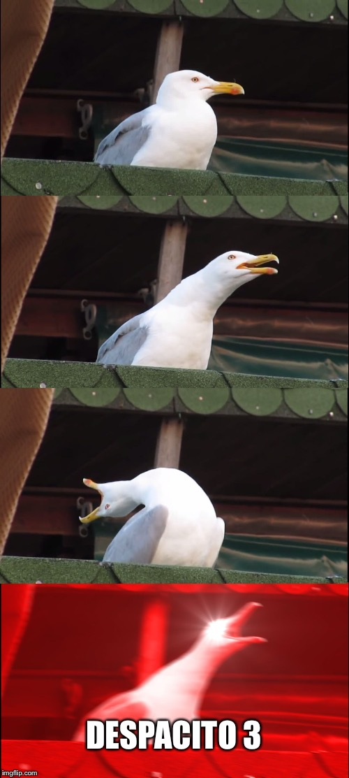 Inhaling Seagull Meme | DESPACITO 3 | image tagged in memes,inhaling seagull | made w/ Imgflip meme maker