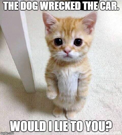 He Wrecked the Car | THE DOG WRECKED THE CAR. WOULD I LIE TO YOU? | image tagged in memes,cute cat | made w/ Imgflip meme maker