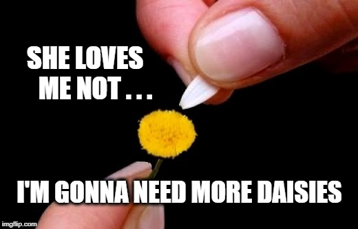 SHE LOVES     ME NOT . . . I'M GONNA NEED MORE DAISIES | image tagged in love,dating,online dating,daisy,flowers,valentine | made w/ Imgflip meme maker