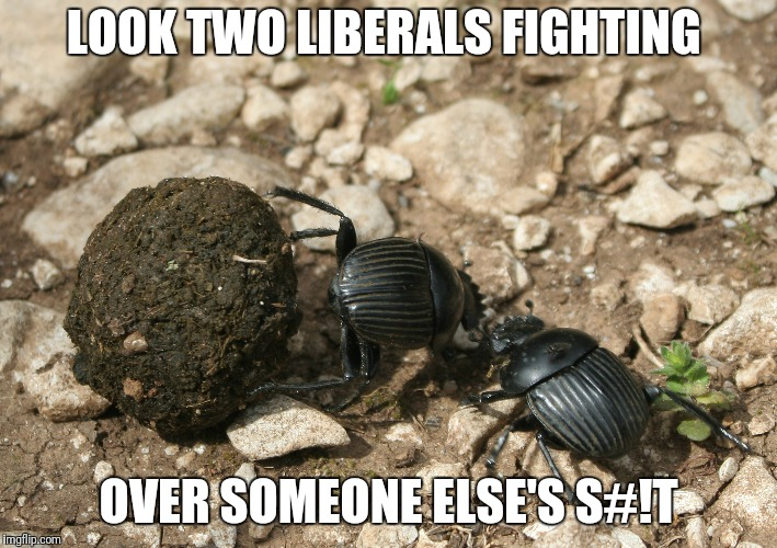 The next election  | LOOK TWO LIBERALS FIGHTING OVER SOMEONE ELSE'S S#!T | image tagged in the next election | made w/ Imgflip meme maker