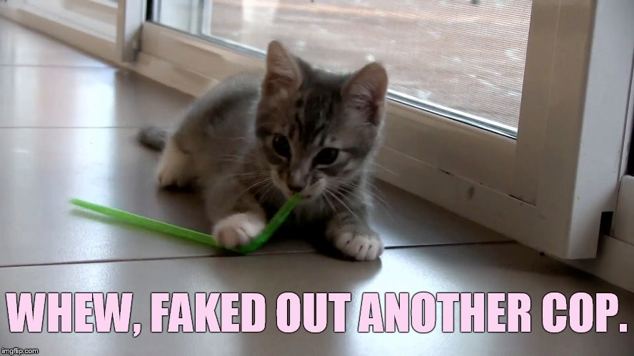 That Was Close | WHEW, FAKED OUT ANOTHER COP. | image tagged in memes,cat,straw,fake,out,cop | made w/ Imgflip meme maker