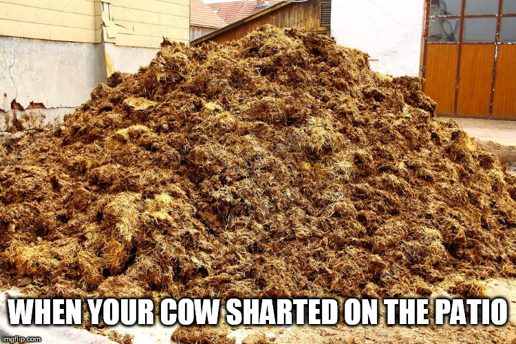 OOPS!   just  put  that  anywhere  Betsy | WHEN YOUR COW SHARTED ON THE PATIO | image tagged in shart,oops,took a dump,crap on the porch | made w/ Imgflip meme maker