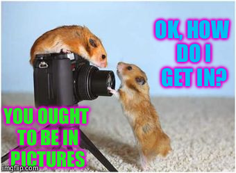 Picture yourself with the Hamsters of Love ~^^~ | YOU OUGHT TO BE IN PICTURES OK, HOW DO I GET IN? | image tagged in photography,hamsters of love,third submission,somebody loves me,pictures,gratitude | made w/ Imgflip meme maker