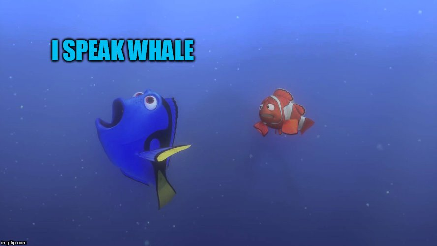 I SPEAK WHALE | made w/ Imgflip meme maker