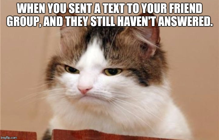 WHEN YOU SENT A TEXT TO YOUR FRIEND GROUP, AND THEY STILL HAVEN'T ANSWERED. | image tagged in cats | made w/ Imgflip meme maker