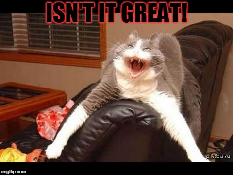 Cat | ISN'T IT GREAT! | image tagged in cat | made w/ Imgflip meme maker