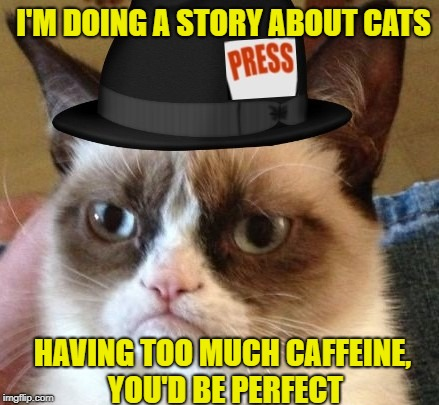 HAVING TOO MUCH CAFFEINE, YOU'D BE PERFECT I'M DOING A STORY ABOUT CATS | made w/ Imgflip meme maker