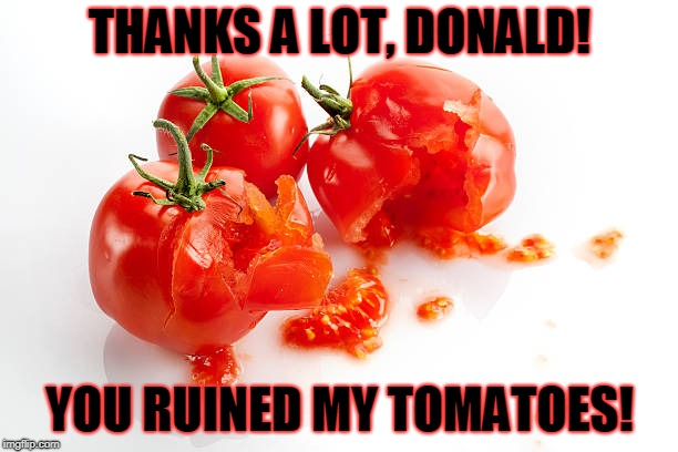 THANKS A LOT, DONALD! YOU RUINED MY TOMATOES! | image tagged in tomato | made w/ Imgflip meme maker