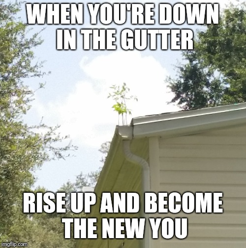 Down doesn't have to mean out. It's a chance to stand tall and start fresh. | WHEN YOU'RE DOWN IN THE GUTTER RISE UP AND BECOME THE NEW YOU | image tagged in motivation | made w/ Imgflip meme maker