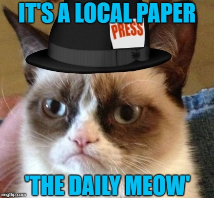 IT'S A LOCAL PAPER 'THE DAILY MEOW' | made w/ Imgflip meme maker