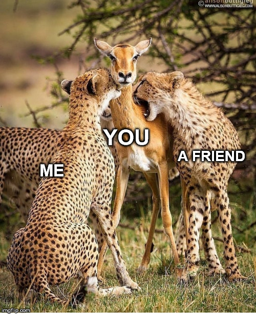 Animals!! ... Animals!! | ME A FRIEND YOU | image tagged in animals,nature | made w/ Imgflip meme maker