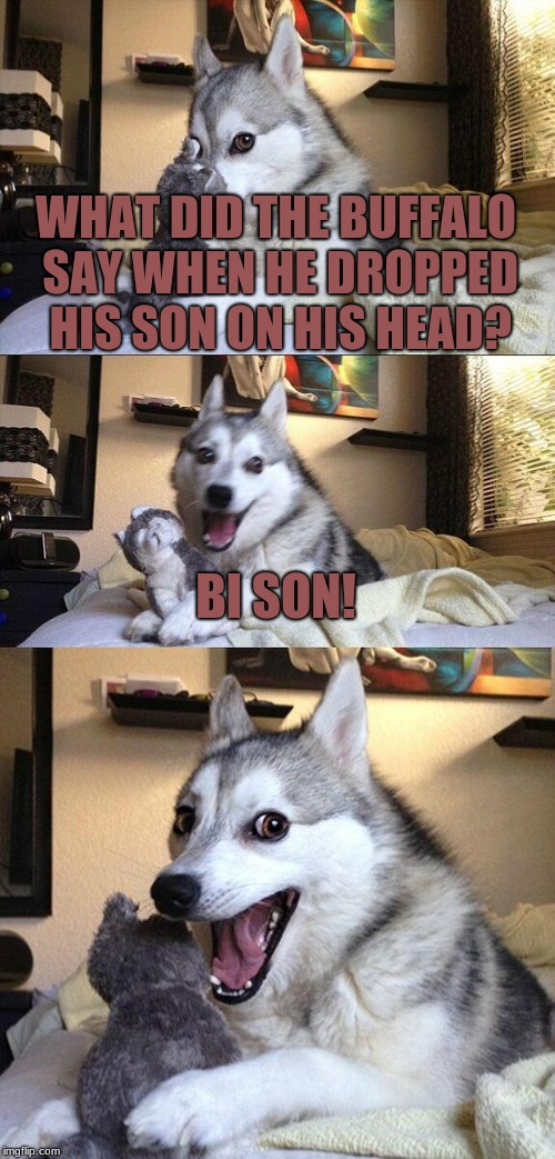 Bad Pun Dog | WHAT DID THE BUFFALO SAY WHEN HE DROPPED HIS SON ON HIS HEAD? BI SON! | image tagged in memes,bad pun dog,buffalo | made w/ Imgflip meme maker
