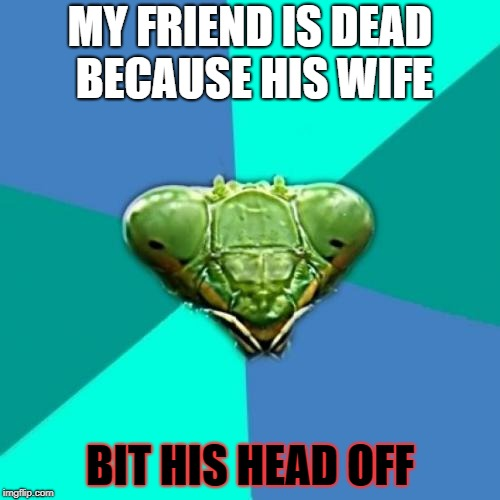Psycho wife praying mantis |  MY FRIEND IS DEAD BECAUSE HIS WIFE; BIT HIS HEAD OFF | image tagged in memes,crazy girlfriend praying mantis,psycho,funny | made w/ Imgflip meme maker