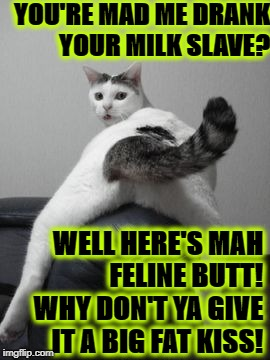 YOU'RE MAD ME DRANK YOUR MILK SLAVE? WELL HERE'S MAH FELINE BUTT! WHY DON'T YA GIVE IT A BIG FAT KISS! | image tagged in kiss feline butt | made w/ Imgflip meme maker