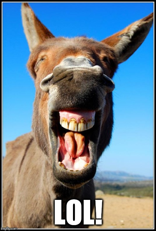 Happy Donkey | LOL! | image tagged in happy donkey | made w/ Imgflip meme maker