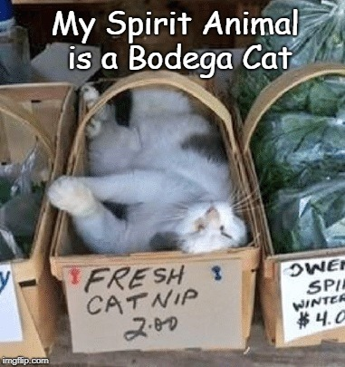 Bodega Cat | My Spirit Animal is a Bodega Cat | image tagged in bodega cat,spirit animal,fresh catnip | made w/ Imgflip meme maker
