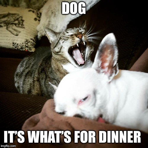 Dinner | DOG IT'S WHAT'S FOR DINNER | image tagged in dinner | made w/ Imgflip meme maker