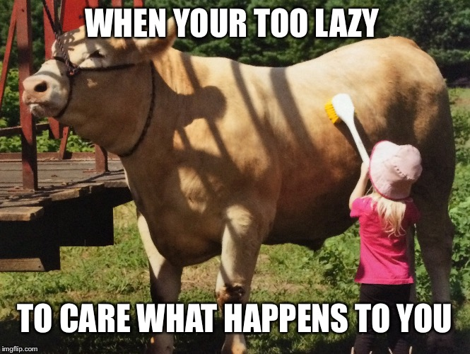 Lazy cow | WHEN YOUR TOO LAZY TO CARE WHAT HAPPENS TO YOU | image tagged in too lazy,wash time laziness,wash time | made w/ Imgflip meme maker