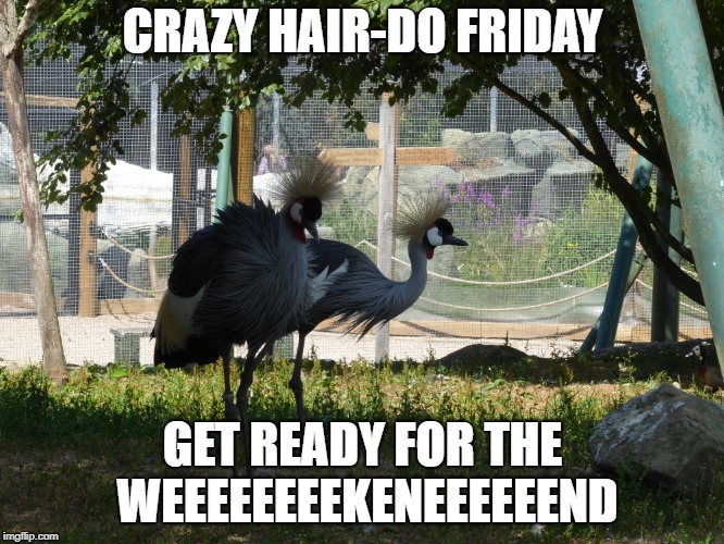 meme | CRAZY HAIR-DO FRIDAY GET READY FOR THE WEEEEEEEEKENEEEEEEND | image tagged in memes | made w/ Imgflip meme maker
