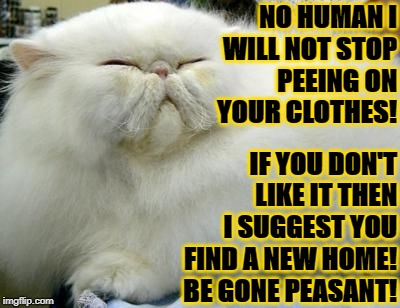 NO HUMAN I WILL NOT STOP PEEING ON YOUR CLOTHES! IF YOU DON'T LIKE IT THEN I SUGGEST YOU FIND A NEW HOME! BE GONE PEASANT! | image tagged in i will not | made w/ Imgflip meme maker