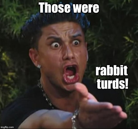 DJ Pauly D Meme | Those were rabbit turds! | image tagged in memes,dj pauly d | made w/ Imgflip meme maker