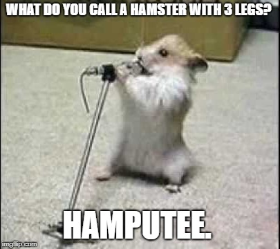 im here all week folks | WHAT DO YOU CALL A HAMSTER WITH 3 LEGS? HAMPUTEE. | image tagged in hamster,comeidian,funny | made w/ Imgflip meme maker
