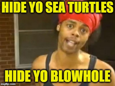 Hide Yo Kids Hide Yo Wife Meme | HIDE YO SEA TURTLES HIDE YO BLOWHOLE | image tagged in memes,hide yo kids hide yo wife | made w/ Imgflip meme maker
