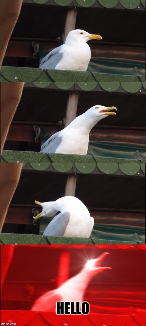 Inhaling Seagull Meme | HELLO | image tagged in memes,inhaling seagull | made w/ Imgflip meme maker
