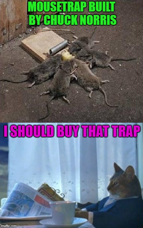 So much for teamwork... | MOUSETRAP BUILT BY CHUCK NORRIS I SHOULD BUY THAT TRAP | image tagged in moustrap,memes,chuck norris,i should buy a boat cat,funny,animals | made w/ Imgflip meme maker