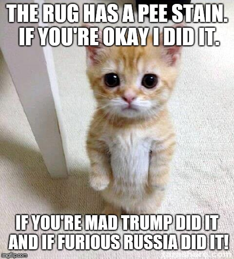 Cute Cat |  THE RUG HAS A PEE STAIN. IF YOU'RE OKAY I DID IT. IF YOU'RE MAD TRUMP DID IT AND IF FURIOUS RUSSIA DID IT! | image tagged in memes,cute cat | made w/ Imgflip meme maker
