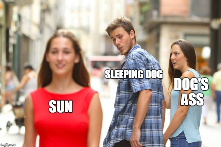 Distracted Boyfriend Meme | SUN SLEEPING DOG DOG'S ASS | image tagged in memes,distracted boyfriend | made w/ Imgflip meme maker
