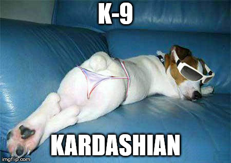 Dog butt | K-9 KARDASHIAN | image tagged in kardashian | made w/ Imgflip meme maker