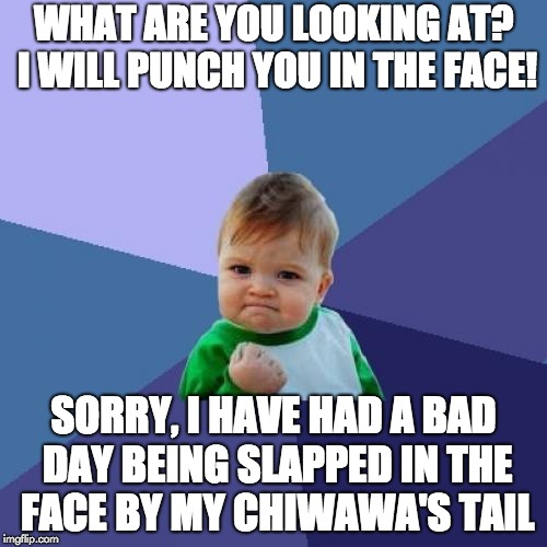 Success Kid | WHAT ARE YOU LOOKING AT? I WILL PUNCH YOU IN THE FACE! SORRY, I HAVE HAD A BAD DAY BEING SLAPPED IN THE FACE BY MY CHIWAWA'S TAIL | image tagged in memes,success kid | made w/ Imgflip meme maker