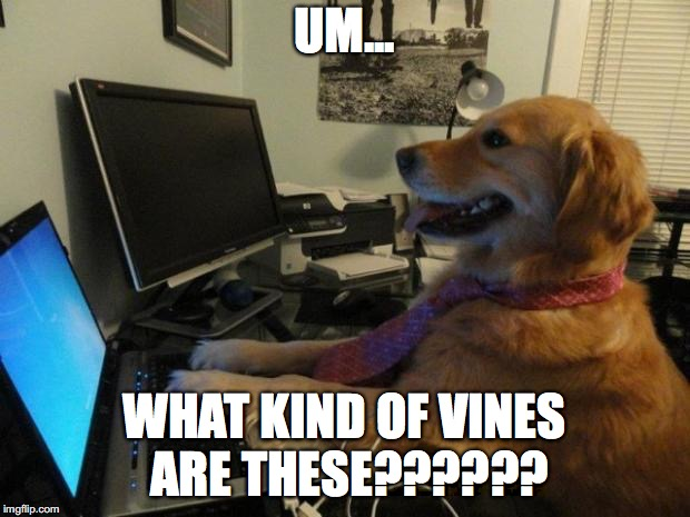 Dog reacts to mmd fnaf vines | UM... WHAT KIND OF VINES ARE THESE?????? | image tagged in dog behind a computer,mmd,memes,funny | made w/ Imgflip meme maker